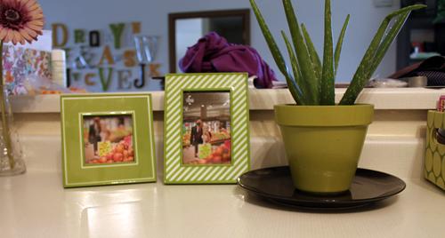 green decor photo frame pot aloe plant cactus